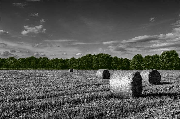 landscapegreen.jpg
